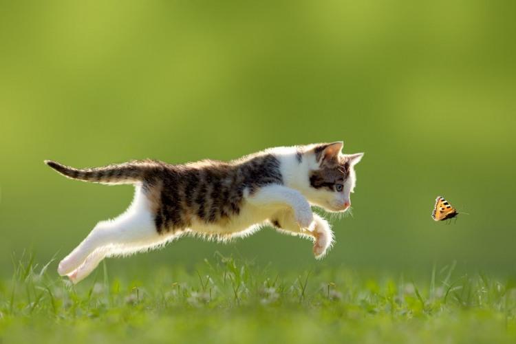 Фото прикол  про котят и бабочек