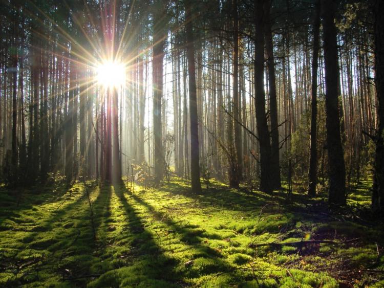 Фото прикол  про лес