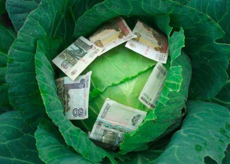Фото прикол  про деньги и капусту