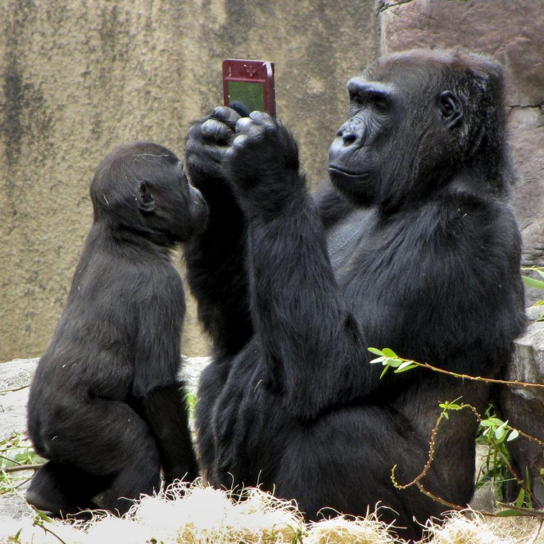 Новые смешные картинки про животных