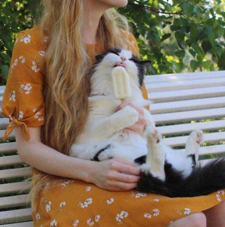 Фото прикол  про котов и мороженое