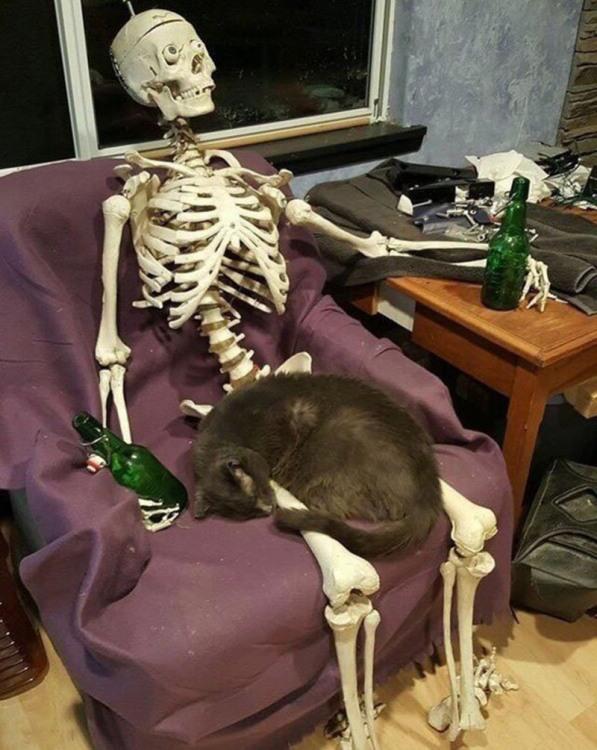 Фото прикол  про скелет, котов черный
