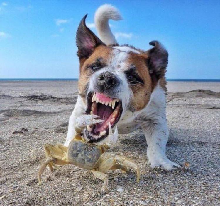 Фото прикол  про собак и крабов