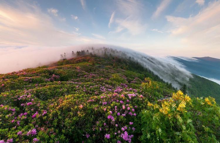 Фото прикол  про горы, природу и туман