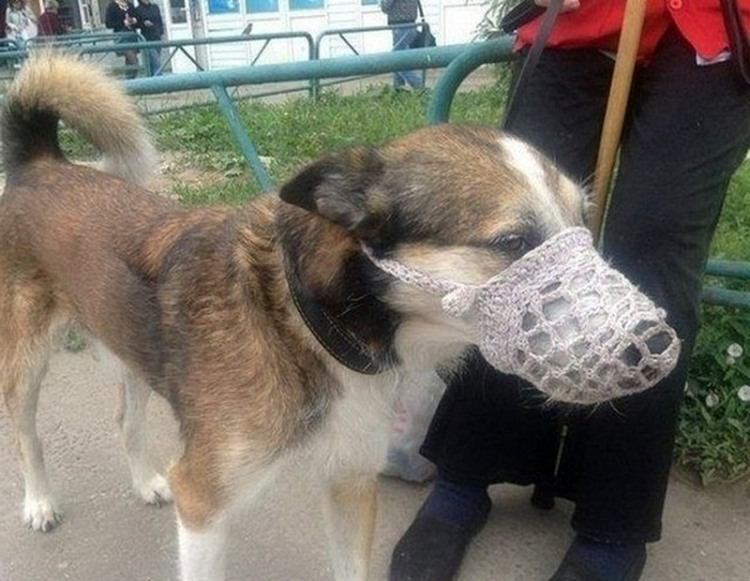 Фото прикол  про собак, намордник и вязание