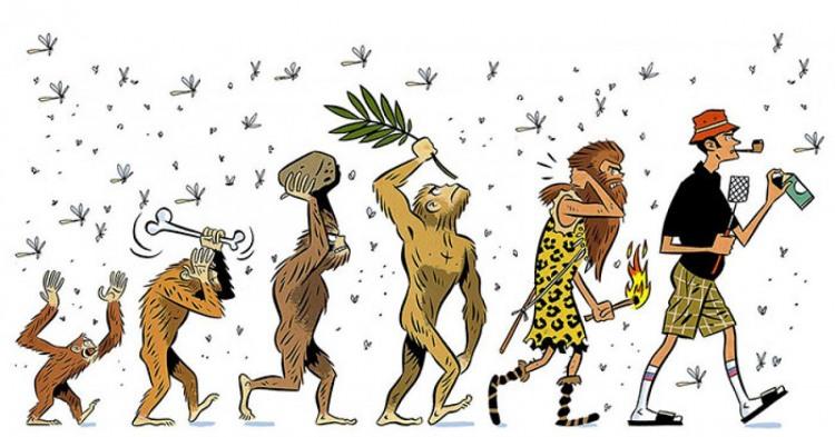 Картинка  про комаров и эволюцию
