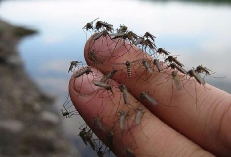 Фото прикол  про комаров