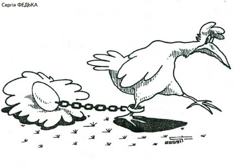 Картинка  про яйца и кур