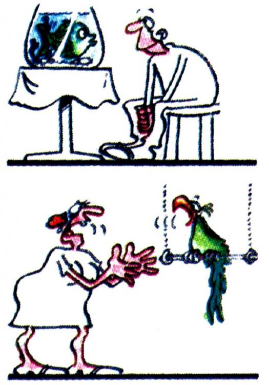 Картинка  про мужчин, женщин, рыбу и попугаев