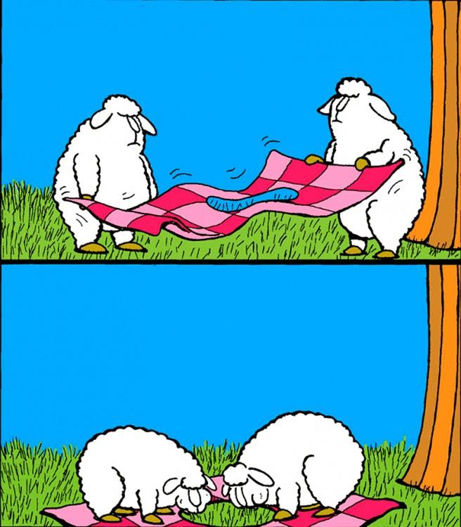 Картинка  про овец