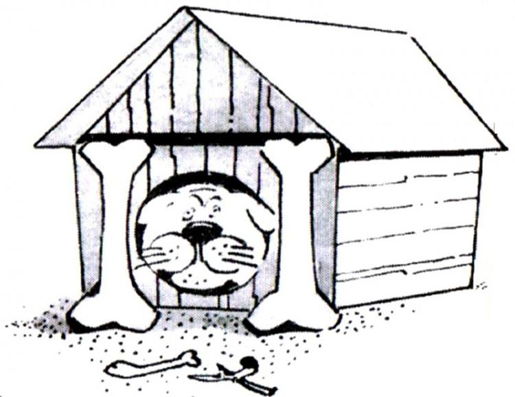 Картинка  про собак, будку и кости