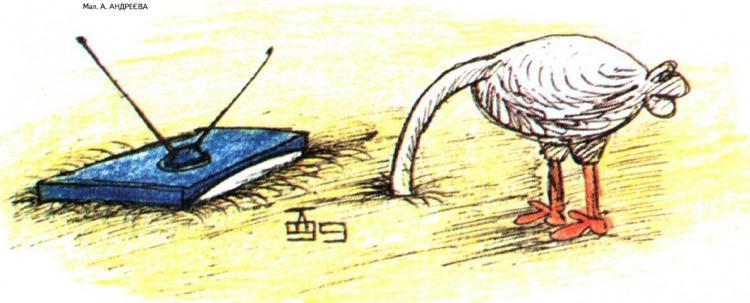 Картинка  про страусов и телевизор