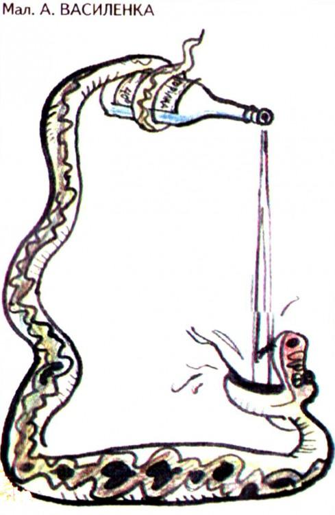 Картинка  про алкоголь и змей