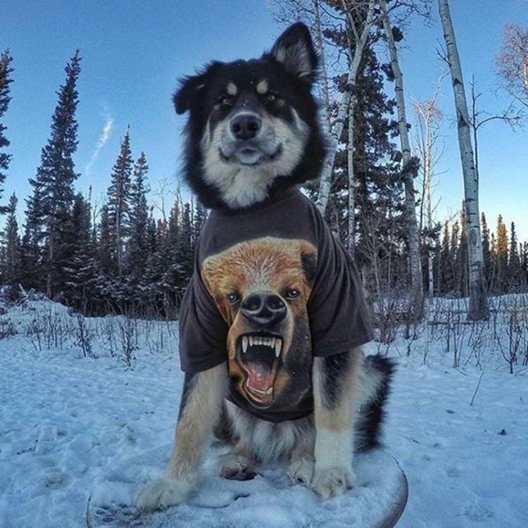 Фото прикол  про собак и медведей