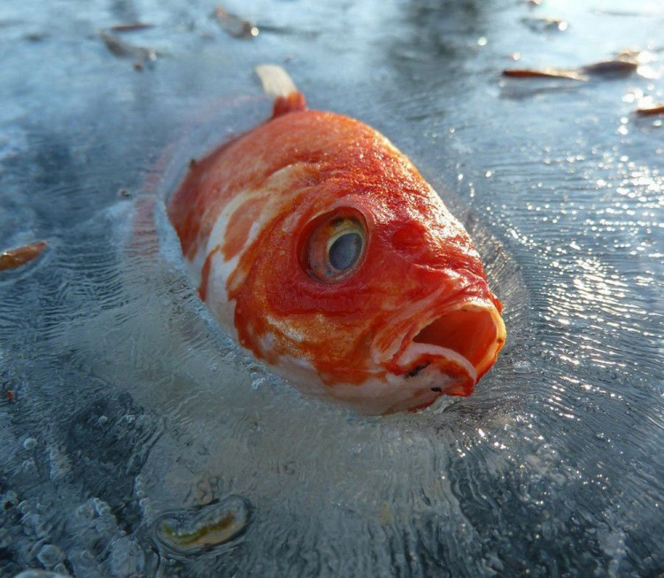 Фото прикол  про рыбу, лед черный