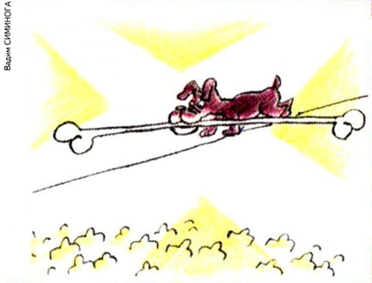 Картинка  про собак и кости