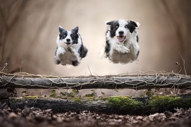 Фото прикол  про собак и прыжки