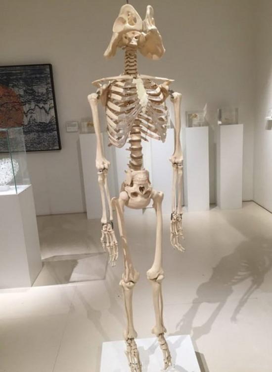 Фото прикол  про скелет