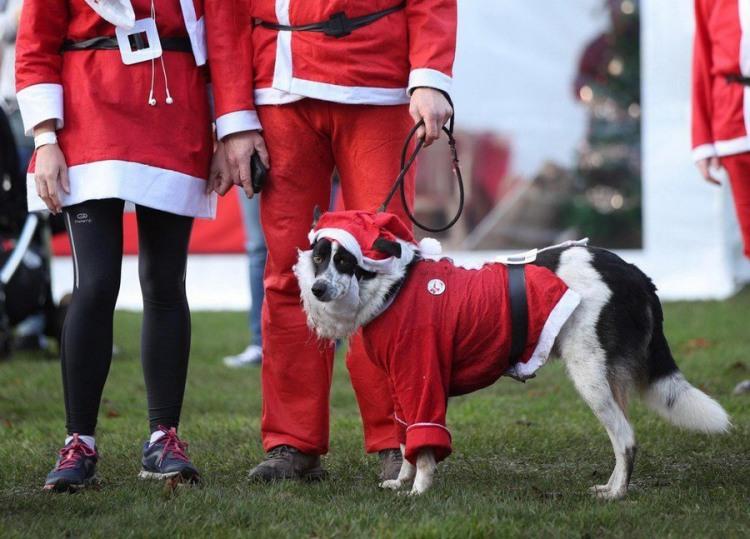 Фото прикол  про собак и новый год