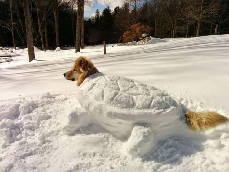 Фото прикол  про собак и снег