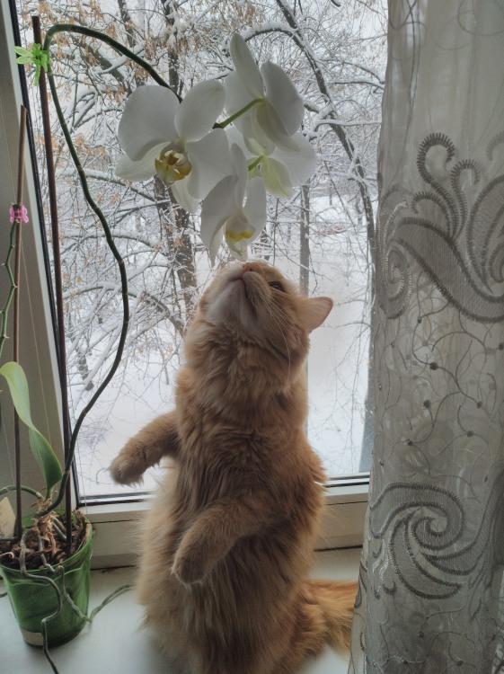 Фото прикол  про котов и цветы
