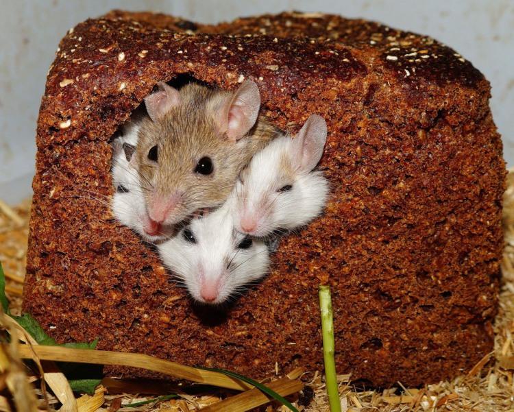 Фото прикол  про мышей и хлеб