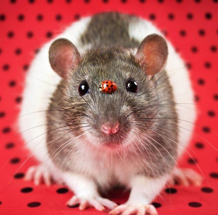 Фото прикол  про мышей и божью коровку