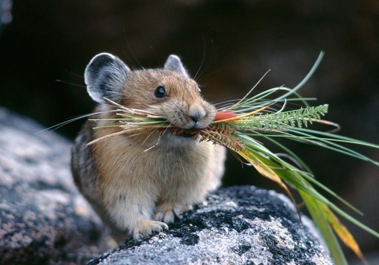 Фото прикол  про мышей