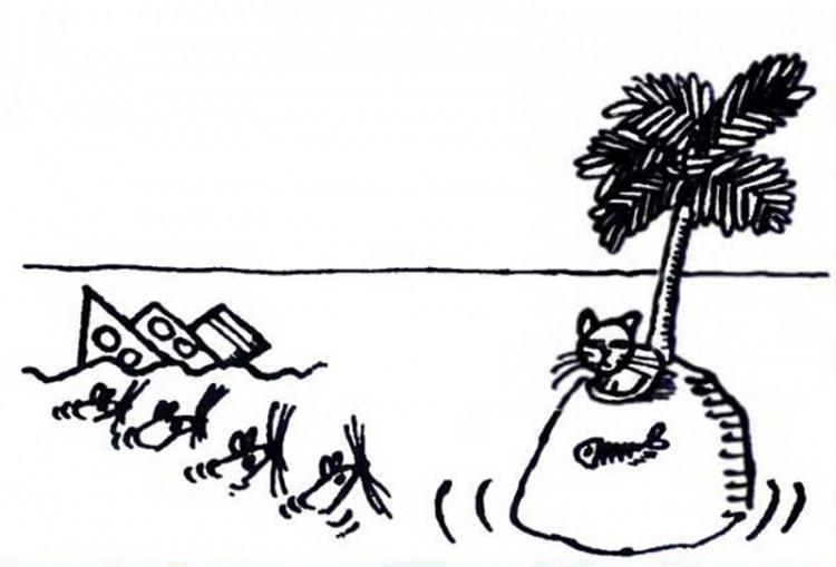 Картинка  про кораблекрушение, крыс, необитаемый остров и котов