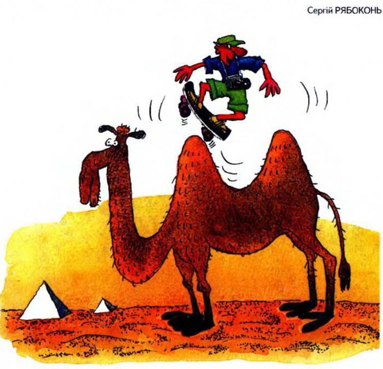 Картинка  про верблюдов и скейтборд