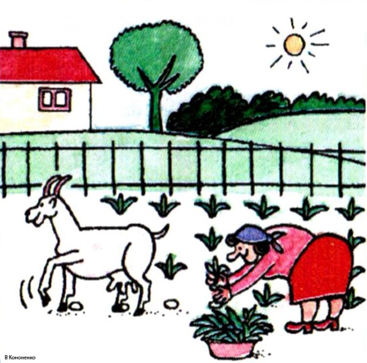 Картинка  про козу и огород