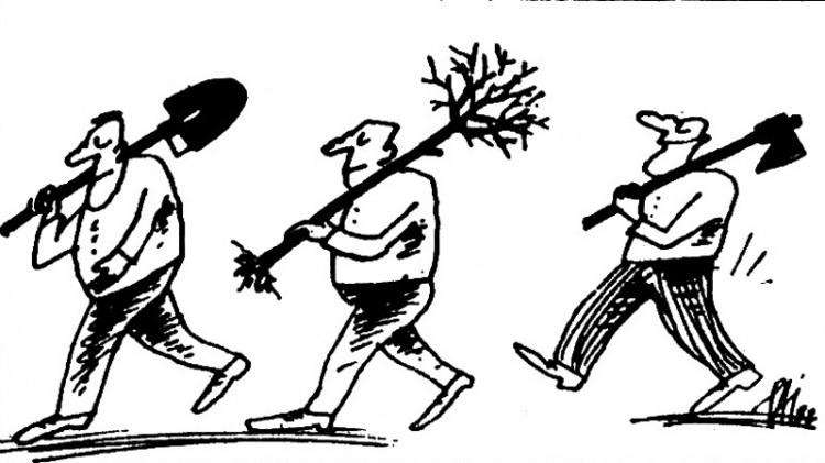 Картинка  про дерево