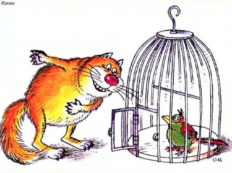 Картинка  про котов, птиц и клетку