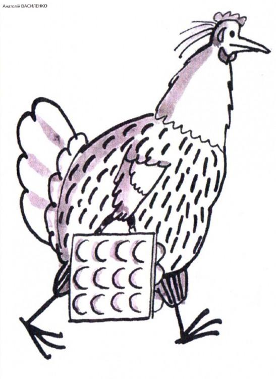 Картинка  про кур и яйца