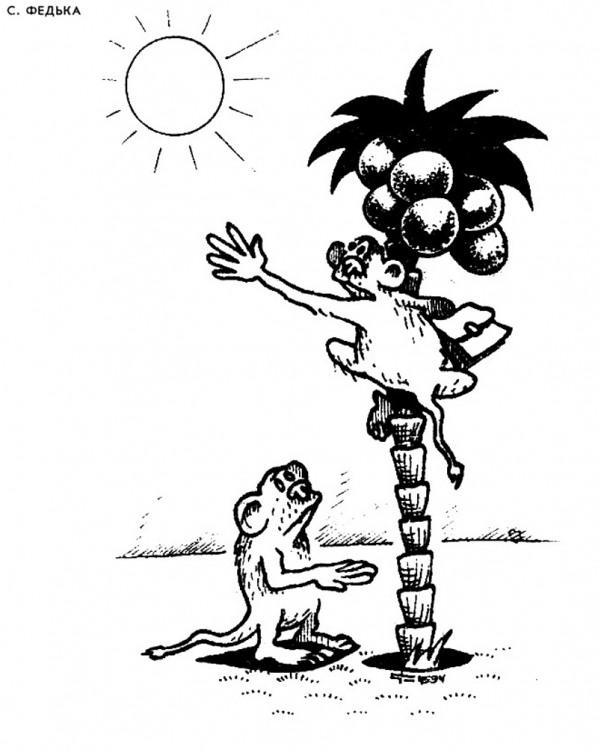 Картинка  про обезьян и солнце
