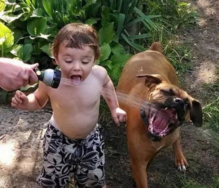 Фото прикол  про детей, собак и воду