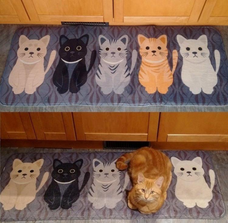 Фото прикол  про ковер и котов