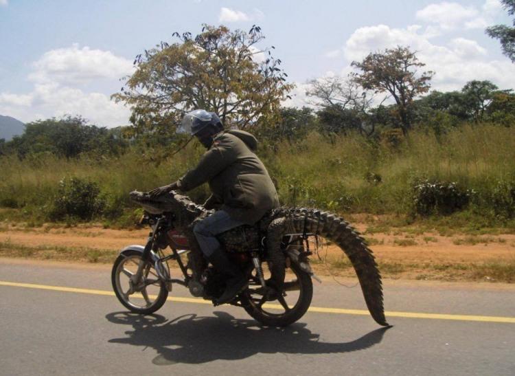 Фото прикол  про мотоциклистов и крокодилов