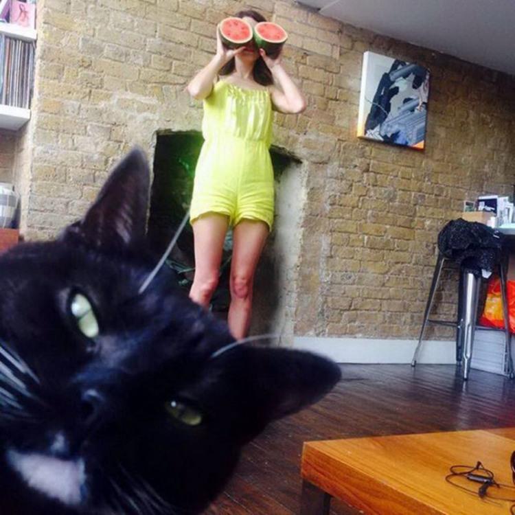 Фото прикол  про девушек, арбуз и котов